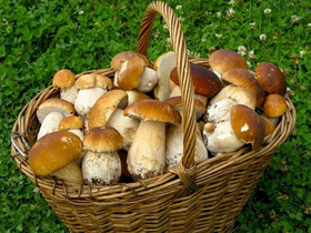 Проявление аллергии на грибы