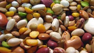 Аллергия  на бобовые