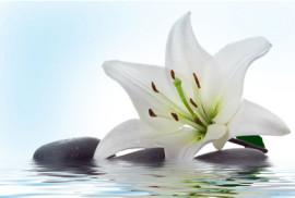Аллергические реакции организма на лилии