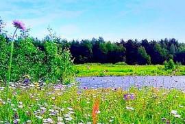 Луговые травы – причина аллергии многих людей