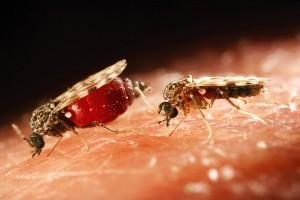 аллергия на мошку