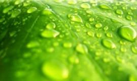 Аллергия: виновата влажность?