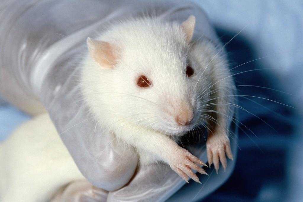 иммунная система мышей