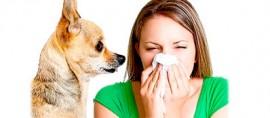 Анализ на аллергию на собак