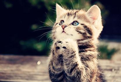 Проявление аллергических реакций у котят