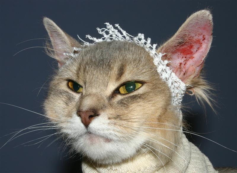 аллергия на кота может пройти