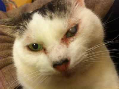 аллергия на кота как быть