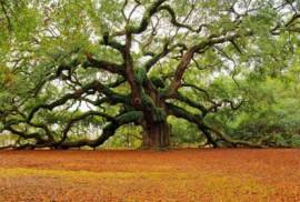 Аллергия на дерево