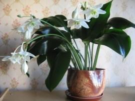 Комнатные растения, вызывающие аллергию — домашние цветы