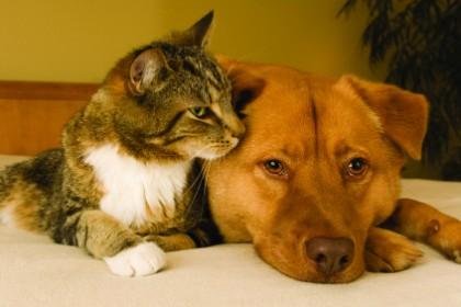 Аллергия у животных