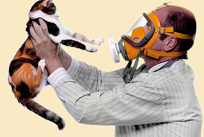 Подробнее об аллергене кошек