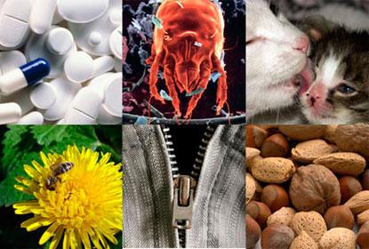 По какому принципу классифицируют аллергены?