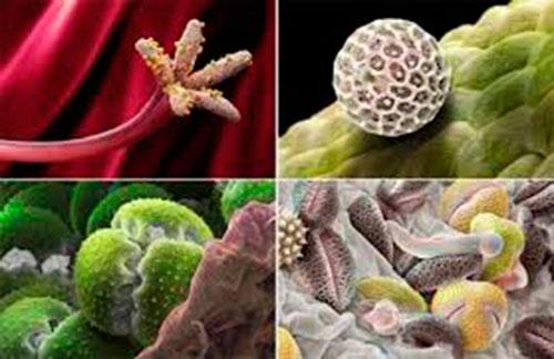 Классификация аллергенов по группам