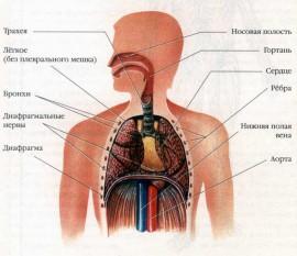 Проблема аллергических заболеваний органов дыхания