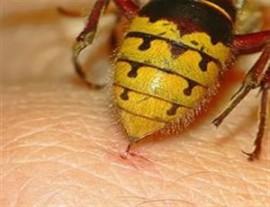 Аллергия на шершни: как предотвратить болезнь, способы лечения