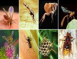 Инсектная аллергия: причины, лечение и профилактика