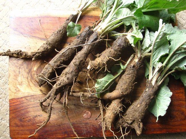 Примочки из отвар из лопуховых корней помогут снять зуд и воспаление с пораженных участков кожи