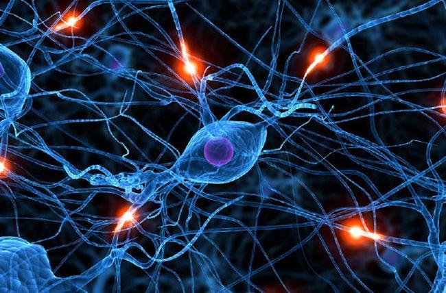 Солнечная экзема может быть вызвана нарушением в работе нервной системы.