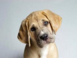 Мокнущая экзема у собак: что вызывает болезнь и в чем сложность лечения?