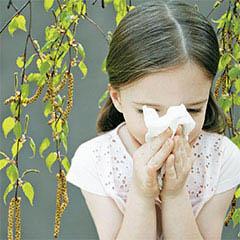 Аллергия на березовую пыльцу